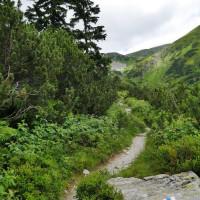 Chodník je príjemný na hornej hranici lesa
