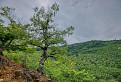 stará breza