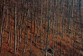 stromy / 1.4545