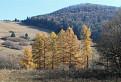 Zlaté stromy / 1.0714