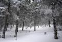 V lese pod Flochovou / 0.0000