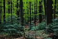 Stužickým lesom II