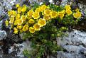 Kvitnúce skaly / 1.0000