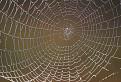 Dúhová pavučina / 1.0769