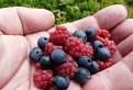 Extra veľké kúsky ovocia / 1.3077