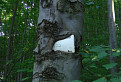 Hladny strom / 1.6875