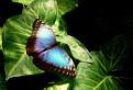 Motýľ 2 / 1.1429