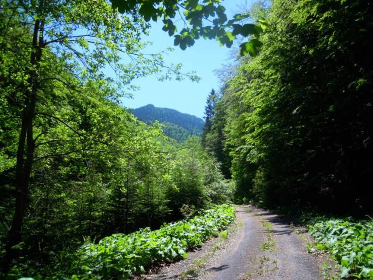 Čierny Kameň z ľubochnianskej doliny