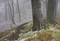 Zamrznutý les / 1.4615
