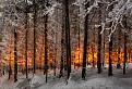 Ohnivý les / 1.0000