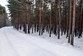 Borovicový les / 1.5000
