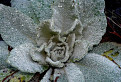 Lesná ruža / 1.2400