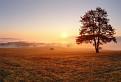 Strom nad Lošoncom