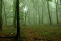 Obyčajný les v obyčajnej hmle