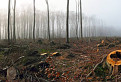 Smutný les / 1.0526