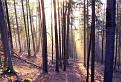 Večerný les / 0.0000