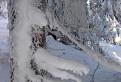 Nízkotatranská značka v zime / 1.3125