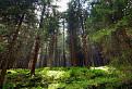 Hustý les / 1.4167