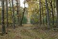 Lesná cesta / 1.0769
