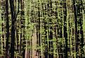 jarný pobúrkový les