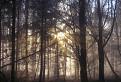 V lese nad Kálnicou / 1.1500