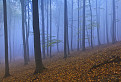 Modrý les / 1.0000