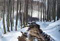 Lesná cesta / 1.0435