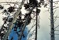 Lesný podhľad / 0.0000