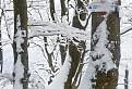 Zima v Sedle za Drieňkom / 1.0357