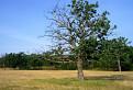 Strom života a smrti / 1.5385