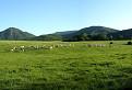 Horský podcelok Strážovských  vrchov Rokoš a stádo  kráv