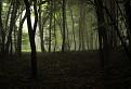 lesy posledných dní / 1.1538