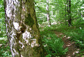 Národná prírodná rezervácia Montrogon