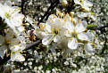 Mravec v kvetinovej džungli / 1.4286