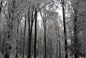 V lese / 1.0968