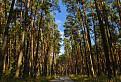 Záhorské lesy / 1.0476