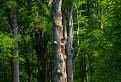 Rozprávkový les / 1.0435
