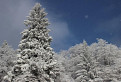Biela zima / 1.8462