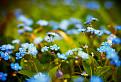 Jarná kvetena... / 1.0333