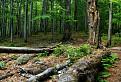 Zvyšky pralesa / 1.0000