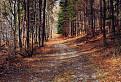 Prechádzka lesom / 1.0000