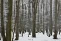 čiarkovaný les / 1.0000