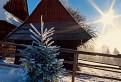 Vianočný strom / 1.0000