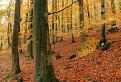 Jesenné Karpaty / 1.0000