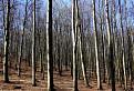 Jarní ranní les  / 1.5000
