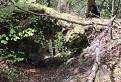 Skalny most na Sivej skale / 1.0000