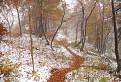 jeseň pred zimou hlávku skloní / 1.0357