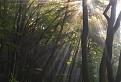 súľovským lesom / 1.0000