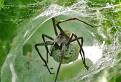Pavúčí príbytok / 1.0000