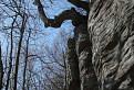 stromy / 1.0952